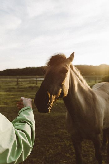 Horse Domestic Animals Mammal Animal Themes One Animal Field Livestock Sky One Person Day Standing Human Body Part Real People Nature Outdoors Low Section Human Hand Tree Close-up People
