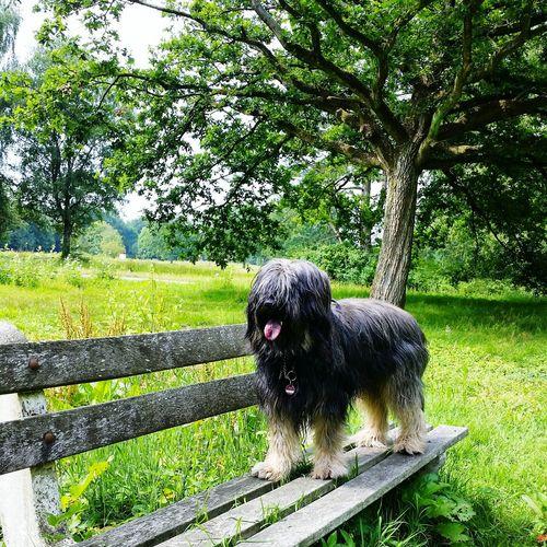 Bentjesgosaugustin in Holland Gos D'atura Dog Walking Ilovemydog I Love My Dog Mydog Dog Landscape Nature