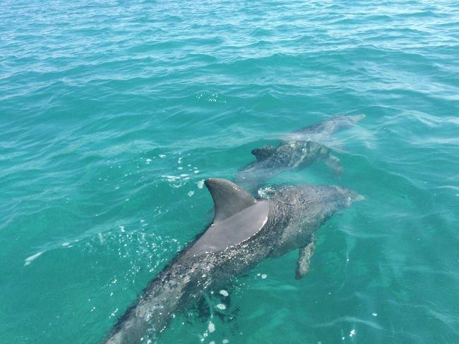 Dolphins Belize  Caye Caulker