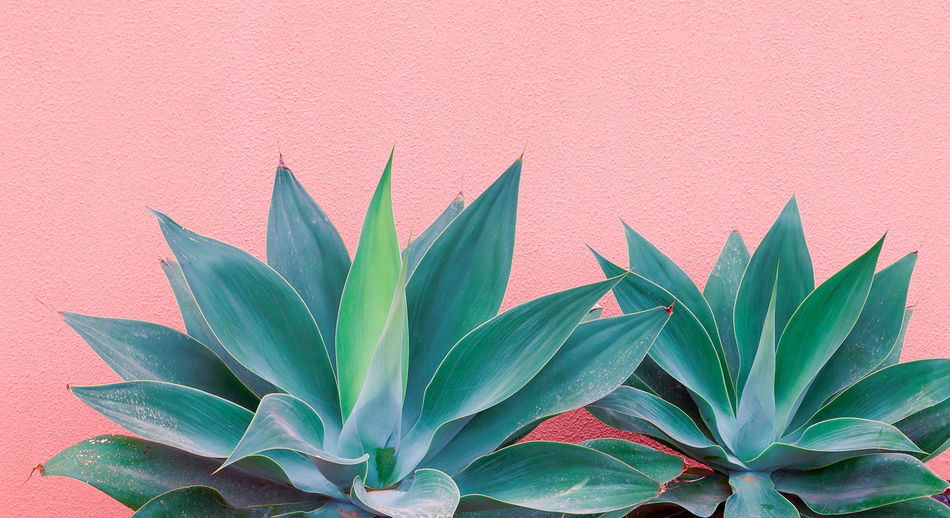Plants on pink fashion concept. palm lover. canary island