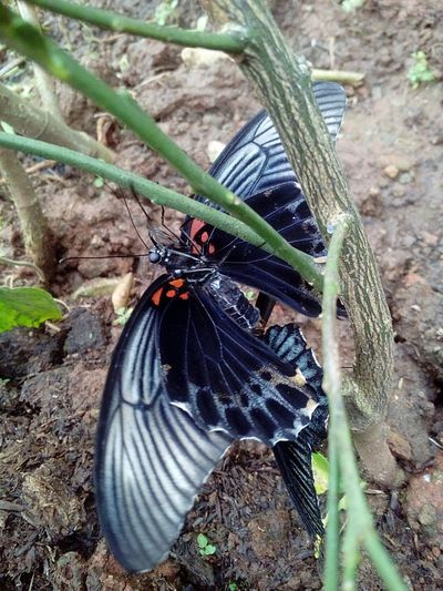 Animal Themes Animals In The Wild One Animal Insect Day Animal Wildlife High Angle View No People Outdoors Nature Close-up Butterfly - Insect Field Plant Spread Wings Mammal