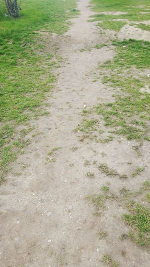 Pathway Troddenpath High Angle View No People Nature Grass Green Color Outdoors