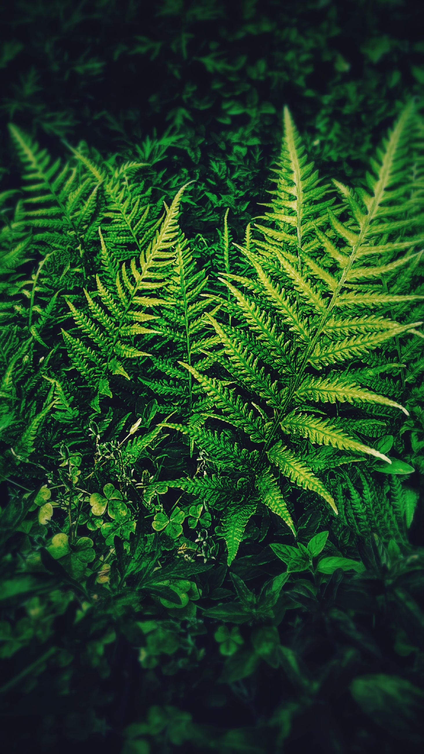 green color, growth, leaf, nature, plant, close-up, beauty in nature, natural pattern, fern, tranquility, green, full frame, backgrounds, no people, outdoors, freshness, pattern, lush foliage, day, growing
