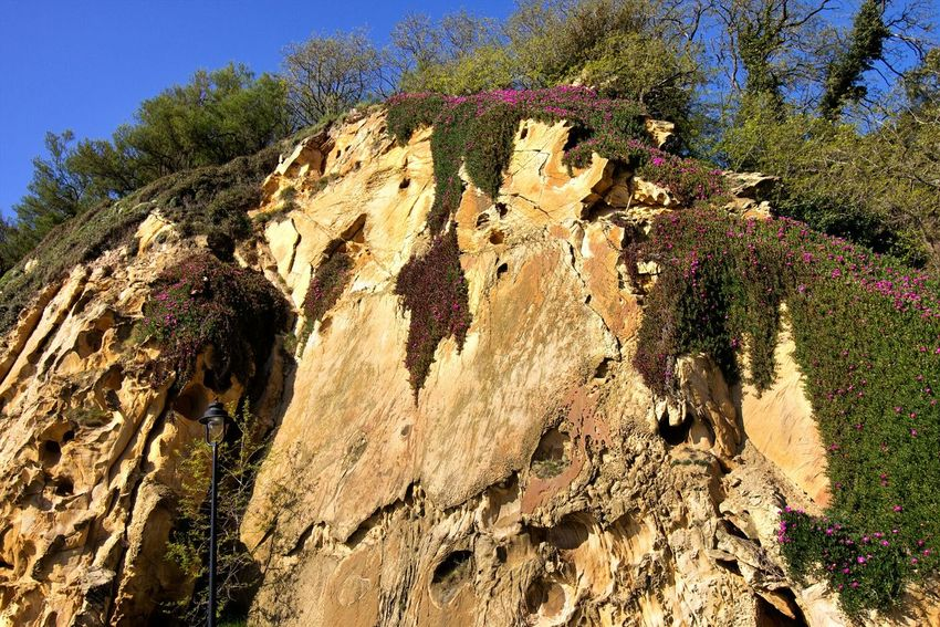Tertiary yellow sandstones shaped by the wind Nature No People My Favorite Photo Erosion Old But Awesome Stone Wall Flowers,Plants & Garden Springtime Sandstone Cliffs Algorta SPAIN