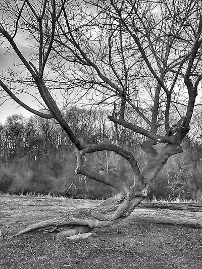 Tree Taking Photos Pics Showmetheworld Providence