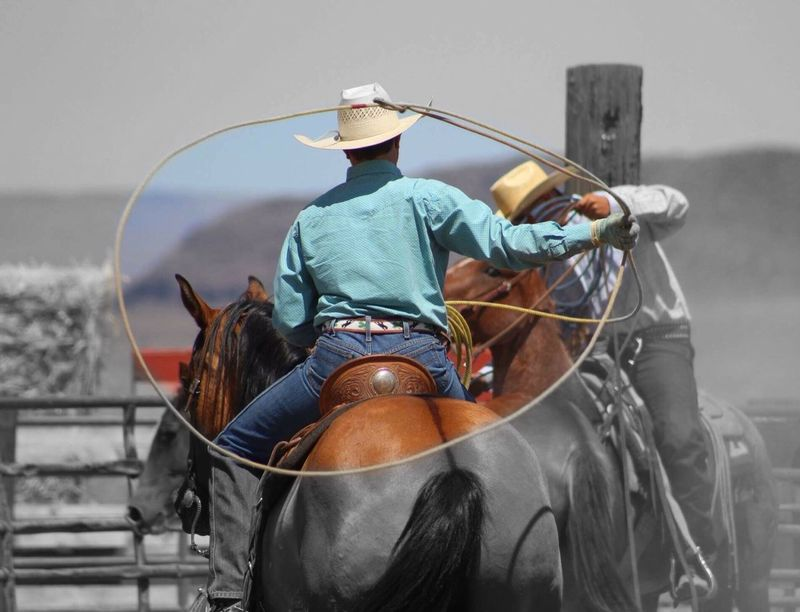 The Color Of Sport Rodeo Western Cowboy