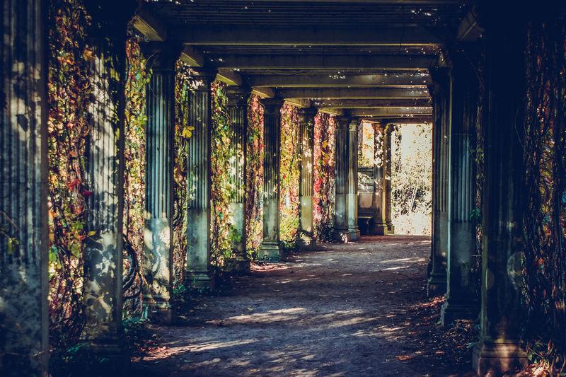 Colonnade in a garden