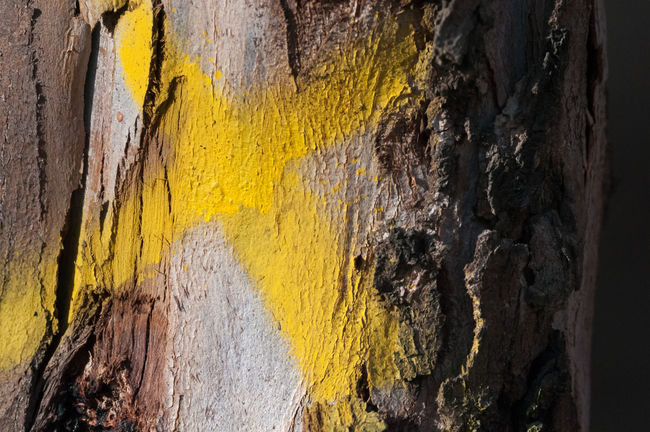 Marked Natural Pattern Tree Trunk Wood Architecture Backgrounds Beauty In Nature Close Up Close-up Day Dry Eucalyptus Eucalyptus Tree Natural Textures Nature_collection No People Outdoors Paint Rough Summer Textured  Timber Weathered X Yellow