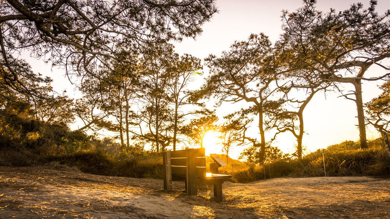 Peaceful bench Peaceful Bench Beauty In Nature Bench In A Park Bench In The Sunset Nature No People Outdoors Peaceful Bench Peaceful Park Scenics Sun Setting Sun Setting In Park Sunlight Sunset Sunset In Nature Tranquility Trees In Nature Trees In The Park