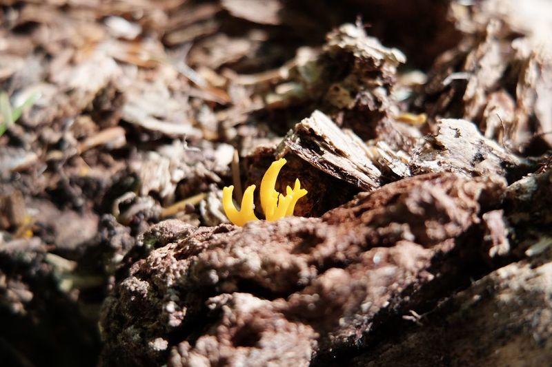 Fungus 🍄 Plant