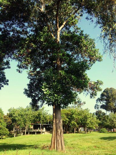 Naturaleza Arboles árbol Barrera