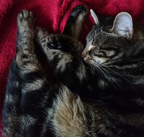 Pets Indoors  Domestic Animals One Animal Red Bed Close-up No People Cats Of EyeEm Mika Fur Sleeping Sleeping Cat