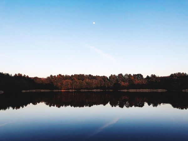 Reflection Nature Beauty In Nature Tree Lake Water Sky Scenics Tranquil Scene Tranquility Silhouette Moon Outdoors Day No People Clear Sky Forest Vapor Trail Astronomy