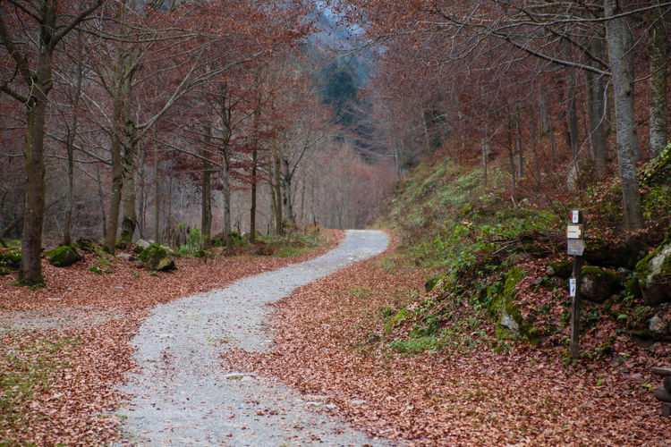 Path flow Autumn Beauty In Nature Canon Day Forest Landscape Leaves Nature No People Outdoors Road Tranquility Tree Zörk