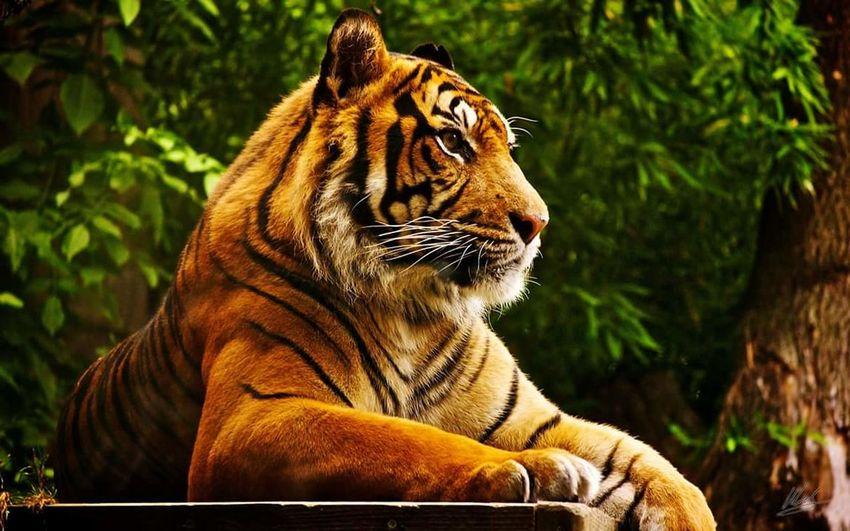Furesa ElSalvador  Elsalvadorimpresionante Elsalvadormipais Elsalvadorphoto Elsalvadordorrimpressive Lion Lion King  📷 Nicepic