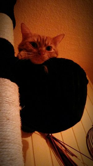 Cat Cats Cat♡ Cat Lovers Cats 🐱 Catsoneyeem Eyemphotography My Lovely Jimmy Animal Animal_collection Animals Animal Photography Animal Love EyeEm Animal Lover Animallovers Animalphotography EyeEm Best Shots Katzenliebe Kater Katzen Katze