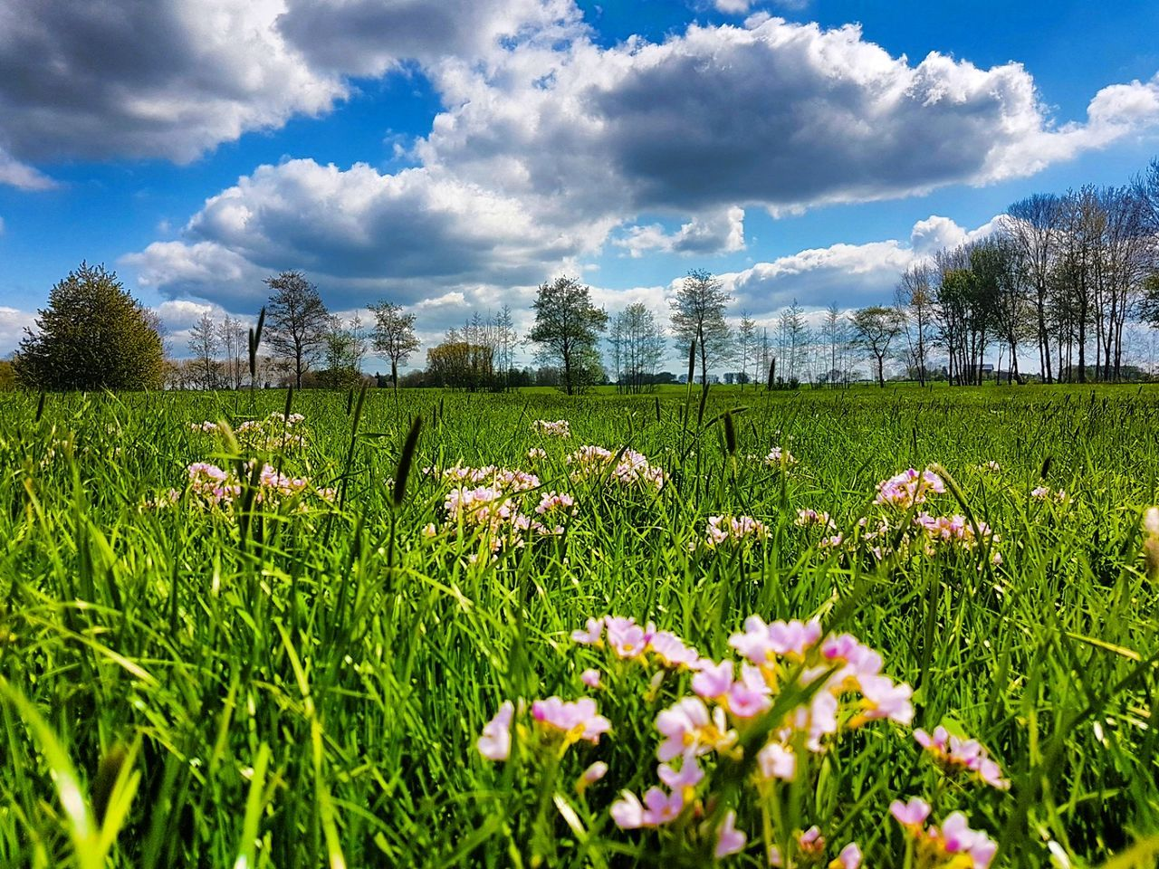 cloud - sky, growth, nature, sky, beauty in nature, field, grass, tranquility, flower, tranquil scene, scenics, plant, day, outdoors, no people, green color, landscape, rural scene, mountain, fragility, freshness, tree