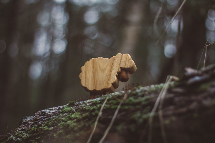 Lamb Toy Toys Wood Wood - Material Forest Nature Wooden Toys Autumn Summer Winter Close-up Selective Focus Tree Focus On Foreground Plant Day No People Land Beauty In Nature Outdoors Food Growth Tree Trunk Moss Rock Fungus Trunk Dry Toadstool