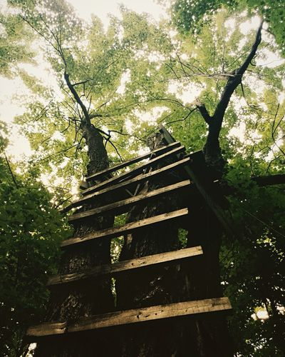 Tranquility Wood Magicplace Ladder Forest Leaves Tree Outdoors No People Low Angle View Day Growth Shadow Branch Nature Go Higher