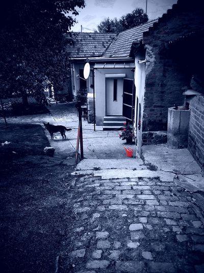 Haus Home Dog