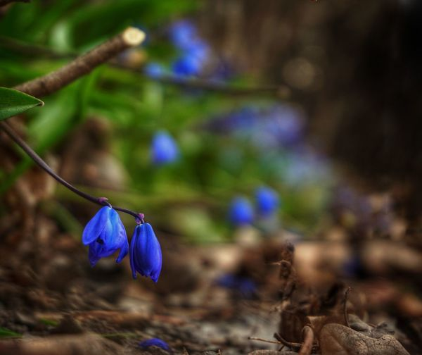 2019 Niklas Storm April Flower Head Flower Purple Leaf Forest Blue Close-up Animal Themes Wildflower Uncultivated Flowering Plant In Bloom Blossom Focus