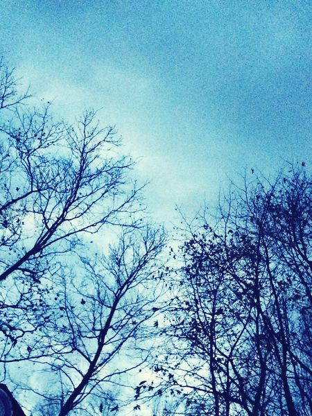 Blueandwhite Sky Only Trees And Sky Trees Nature Sky Tree No People Silhouette Forest