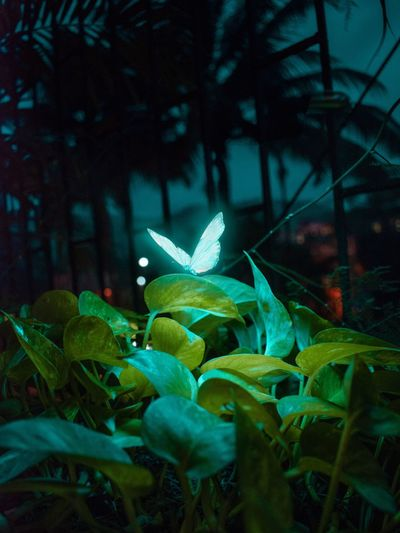 Glowing Butterfly Butterfly Butterfly - Insect Butterfly Collection Neon Glowing Glow EyeEm Best Shots EyeEm Selects EyeEmNewHere EyeEm Gallery EyeEm Best Edits Photoshop EyeEmBestPics Environment Camera Work Surrealist Art Surrealism EyeEm Nature Lover Creative Photography Manipulation Magic Lights Cityscape Nature Arts Culture And Entertainment Close-up Green Color Pollen Flower Head Plant Life