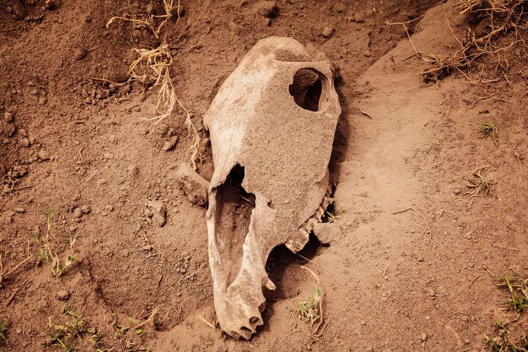 Preys Death Desert Drought Hot Kenya Zebra Animal Skull Animal Themes Climate Change Day Hunt Mammal Nature No People Old Outdoors People Safari Sand Skull Summer Warm Zebra Skull EyeEmNewHere An Eye For Travel
