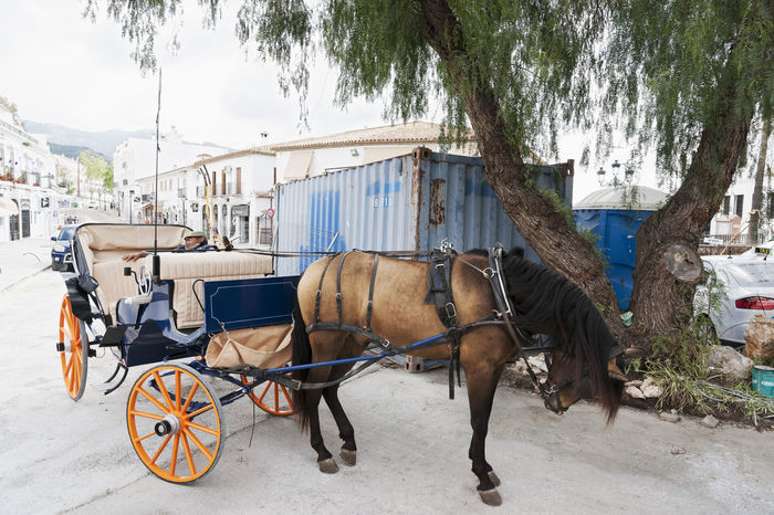 Mijas, Spain Donkey Horse Cart Mijas Mode Of Transport Outdoors SPAIN Street Street Photography Streetphotography Taxi Village Village Life Working Animal