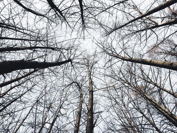 Seoul Korea Forest Winter