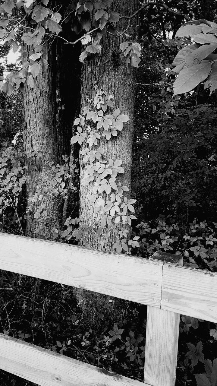 growth, no people, outdoors, plant, day, wood - material, nature, tree, built structure, ivy, architecture, close-up
