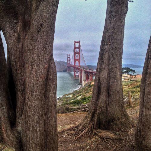 GoldenGateBridge Sanfrancisco California Trees