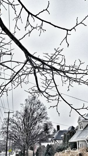 Cold wind blows Syracuse Ny Eastwood Winter Trees Icy Wonderland