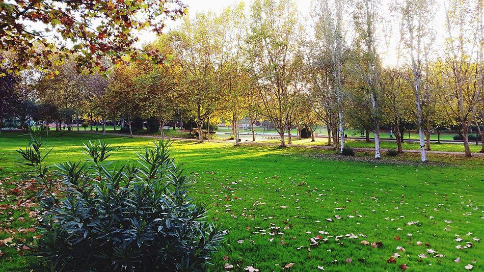 Showcase: November Trees Park Grass Green Leaves Autumn Leaves Light My Best Photo 2015
