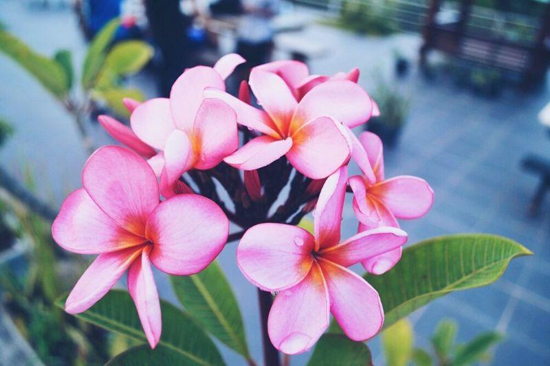 Flowernature Beautyflowers Macroshoot Justshoot