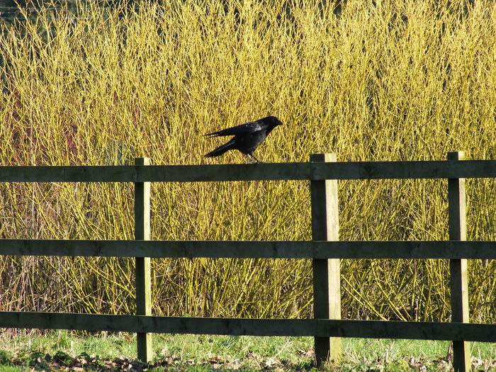 Black Bird Taking Photos Alvaston Castle Country Park Derby Uk Spring Has Arrived Taking Photos Enjoying Life My Adventures Captured Moment Great Day Out