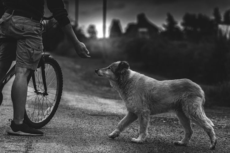 Low section of man with bicycle standing by dog on road