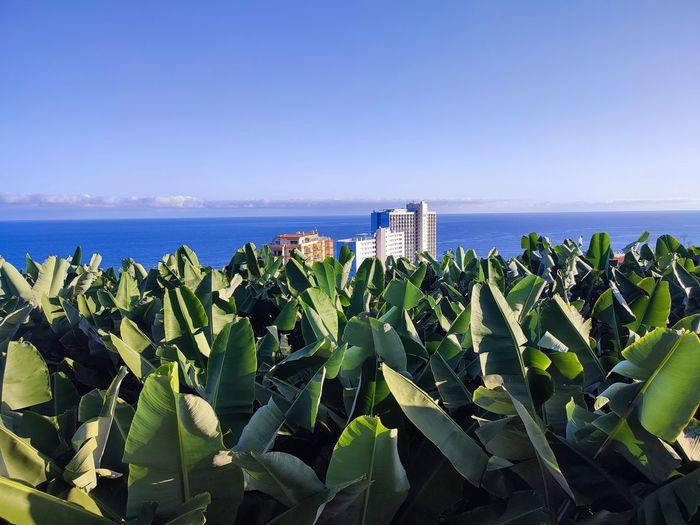 Plants growing on beach against sky