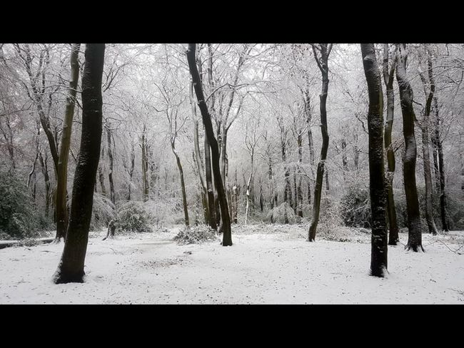 Winter snow forestry Snow Covered