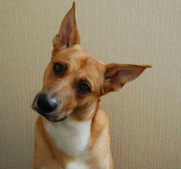 МояСобака пес Dog Mylove Mylovelydog