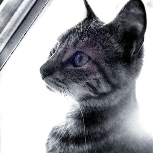 Little little Cat Lola