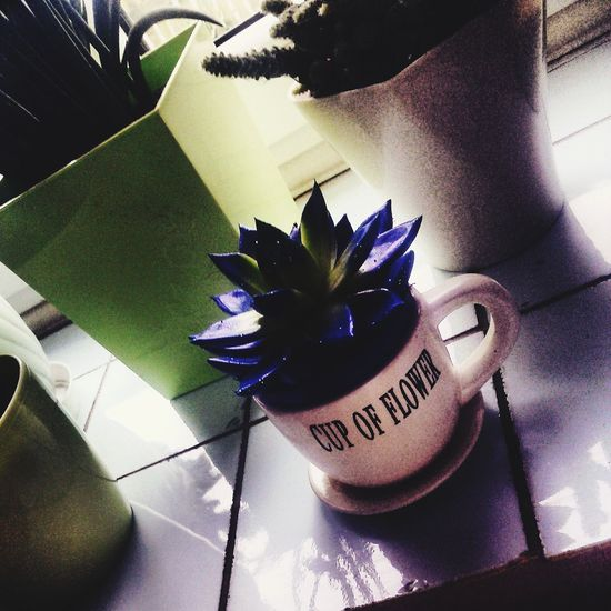 Cup of flower 👌🙊😺 First Eyeem Photo
