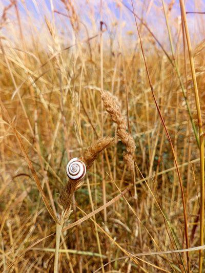 The snail Snail