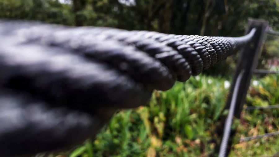 Paranapiacaba Thick Metal Strength Close-up Grass