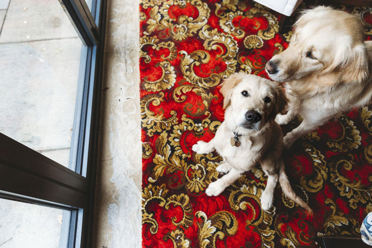 High angle view of dog sitting on floor