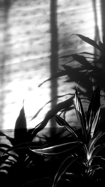 Room Plant Shadows On The Wall Shadows & Lights Bwphotography Black And White