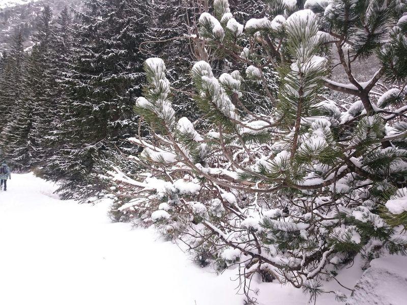 Love Time Snow Winter MyPhotography Polishgirl Poland Mountains Tatry Morskieoko Showcase: February