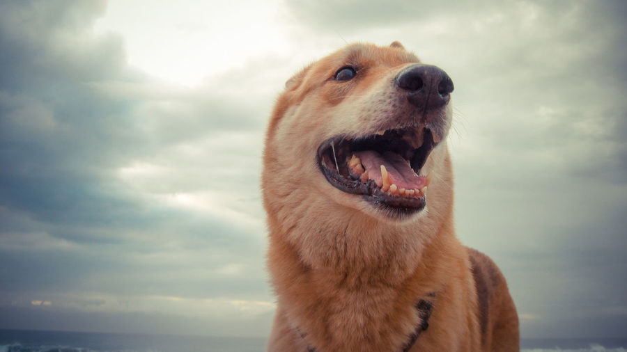 Close-up Cloud - Sky Dog Domestic Animals Nature No People One Animal Outdoors Pets Sky