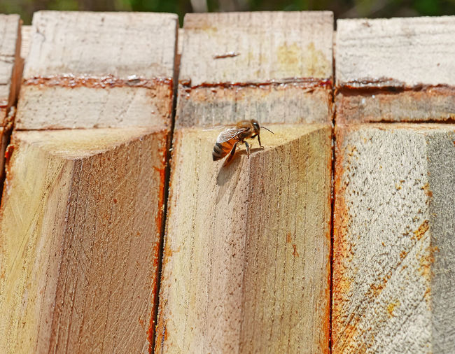 Close-up of bee on wall