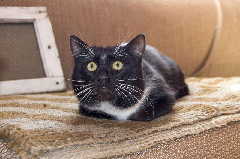 Portrait of black cat relaxing on floor